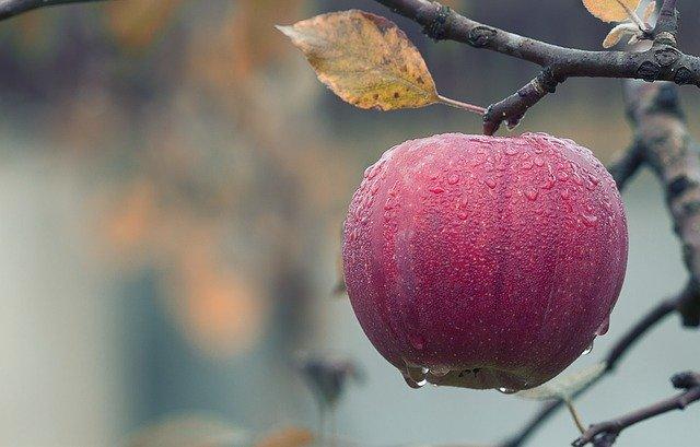 Яблоки на чердаке