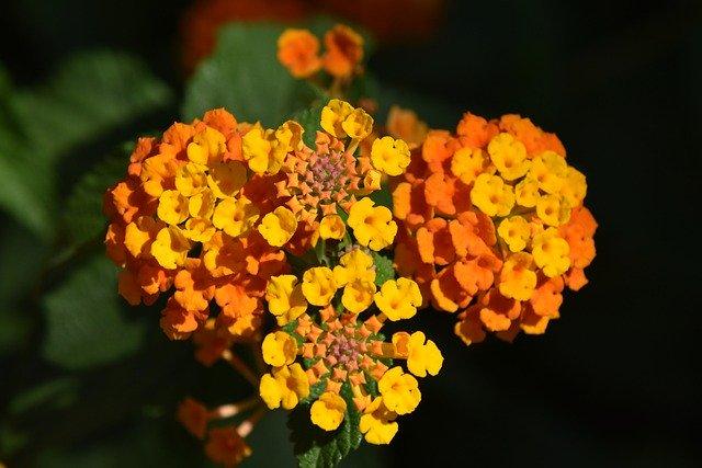 Цветы: работа над ошибками