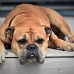 Собакам легче прокормиться  около мусорных баков