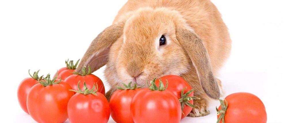 Пока я лежала в больнице, зайцы собрали все томаты