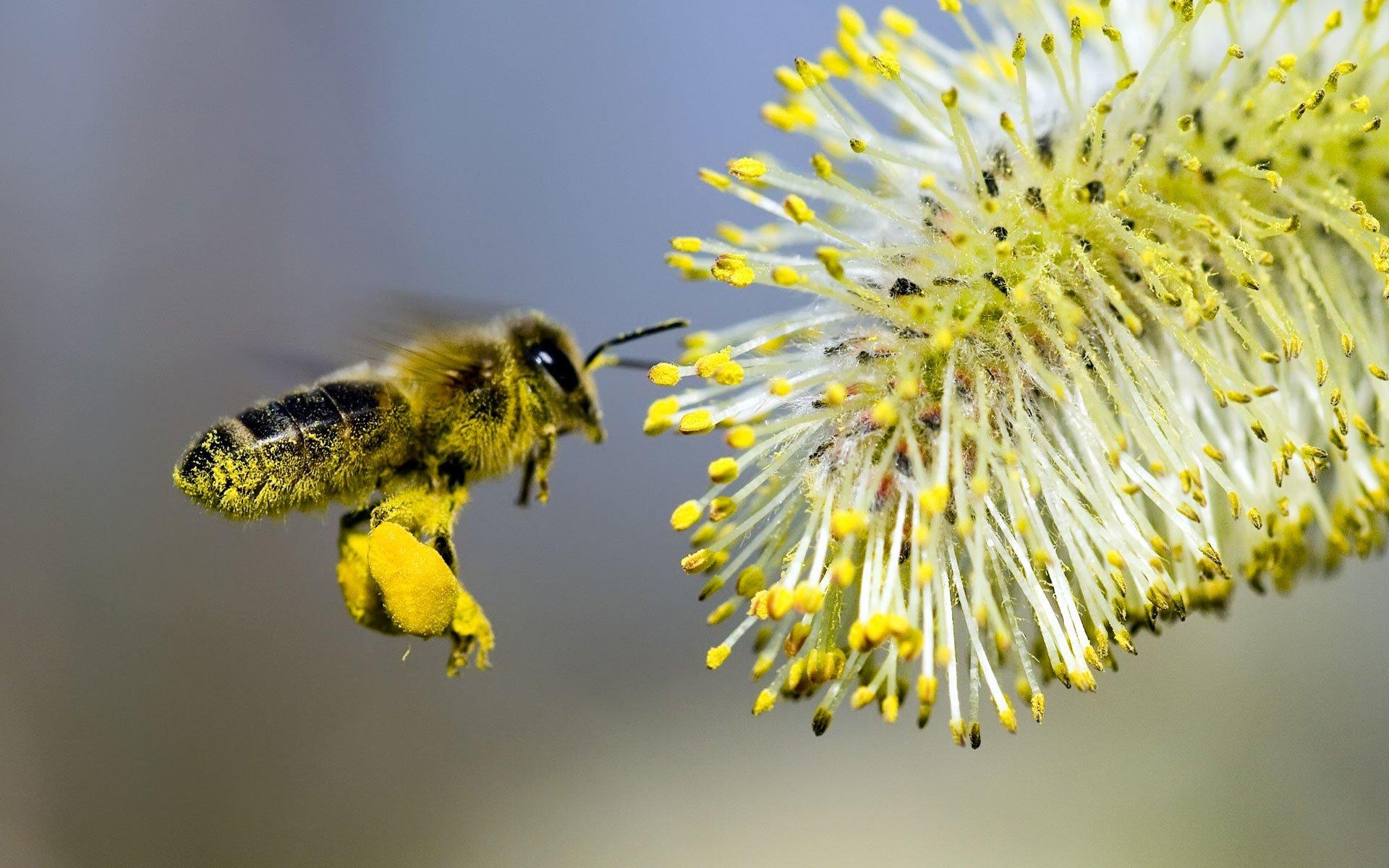 К пыльце опасно прикасаться